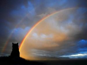 ponte arcobalenp
