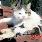 Copertina Calendario Gatti dell'Oasi Felina