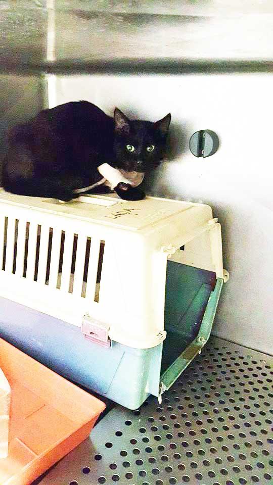 Claretta - gattina abbandonata