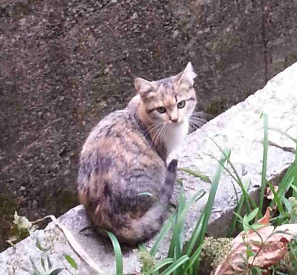 Gattini-pallare