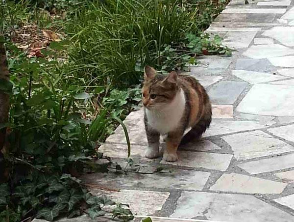 Gattini-pallare2