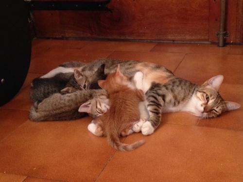 gattini adozione