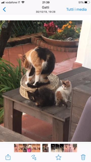 gattini da adottare2